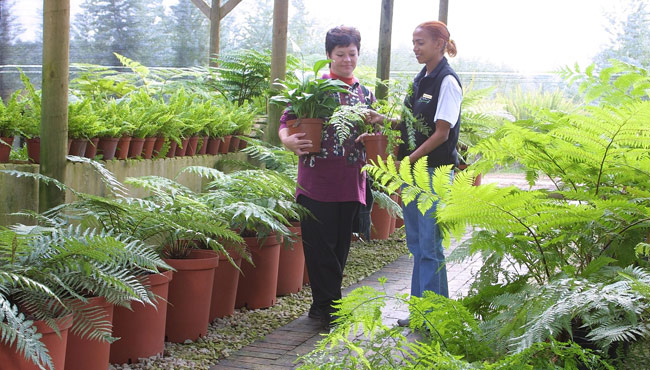 Forest Ferns Nursery